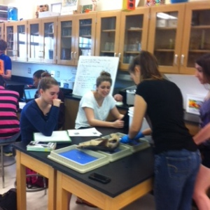 Students dissect the shark.